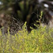 Nature des Iles de Kerkennah