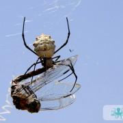 Araignée et libellule ciel