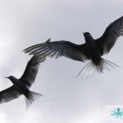 Oiseau de mer photo 2
