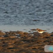 Oiseau de mer photo 1