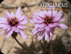 Focus sur une fleur de Kerkennah