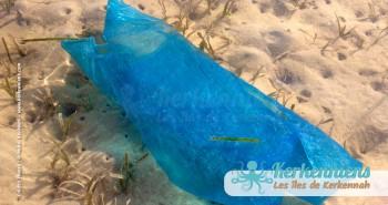 Le grand nettoyage des plages de Kerkennah Tunisie