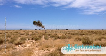 îlot de Grimdi Tunisie Archipel de Kerkennah photo 12