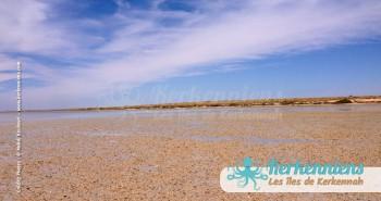 îlot de Grimdi Tunisie Archipel de Kerkennah photo 17