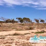 Paysage de l'îlot de Grimdi – Archipel de Kerkennah