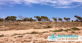 îlot de Grimdi Tunisie Archipel de Kerkennah photo 5