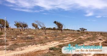 îlot de Grimdi Tunisie Archipel de Kerkennah photo 7