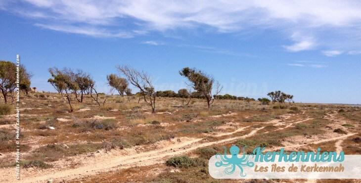 Marche découverte de l'îlot de Grimdi – Archipel de Kerkennah