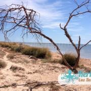 L'aridité climatique sur l'îlot de Grimdi – Archipel de Kerkennah