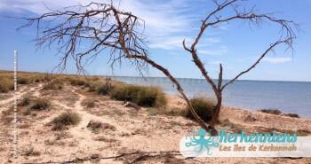 îlot de Grimdi Tunisie Archipel de Kerkennah photo 8