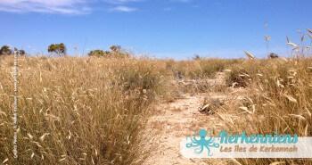 îlot de Grimdi Tunisie Archipel de Kerkennah photo 9
