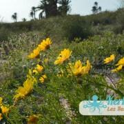 Kerkennah en fleurs San'Art Photographie (Sanna Fehri) Photographe Amateur