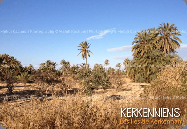 Kerkennah, havre de mon enfance - Photo 1