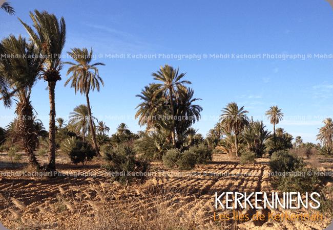 Kerkennah, havre de mon enfance - Photo 2