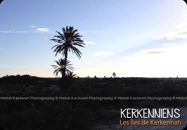 Kerkennah, havre de mon enfance - Photo 3