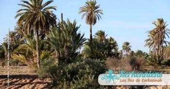 Kerkennah, havre de mon enfance Tunisie