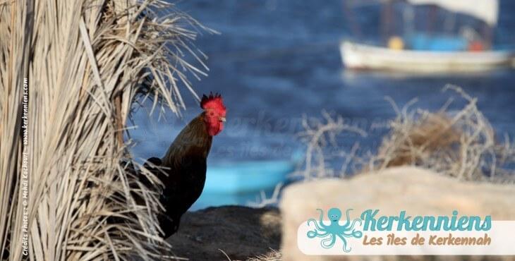 Ouled Yaneg village des îles de Kerkennah (Tunisie)