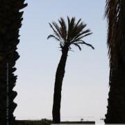 Photo de palmier à Kerkennah