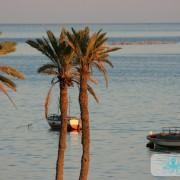 Couple de palmiers kerkenniens