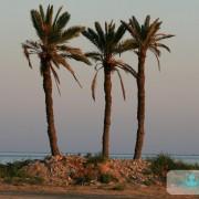 Trois Palmiers de Sidi Said