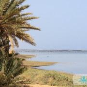 Palmiers à Karkna