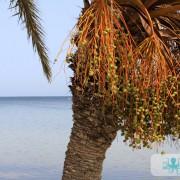 Barques et palmiers