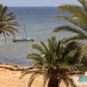 Palmiers du village de Ouled Kacem