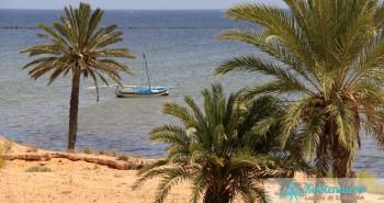 Album photos : Palmiers des Iles de Kerkennah