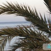 Palmes de palmier