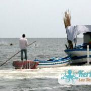 La pêche à la Sautade (Damassa)