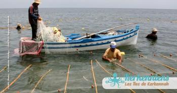 Pêche à la Sautade Damassa pêche au mulet à Kerkennah image 16