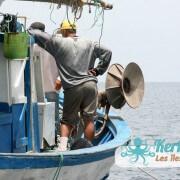 Le partage de la pêche est en cours…