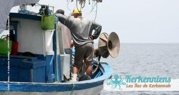 Pêche à la Sautade Damassa pêche au mulet à Kerkennah image 20