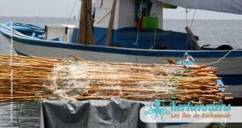 Pêche à la Sautade Damassa pêche au mulet à Kerkennah image 3