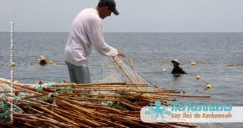 Pêche à la Sautade Damassa pêche au mulet à Kerkennah image 5