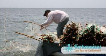 Pêche à la Sautade Damassa pêche au mulet à Kerkennah image 6