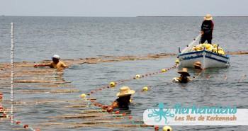 Pêche à la Sautade ou Damassa vous dit quelque chose kerkennah Tunisie