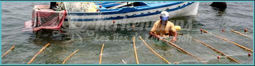"""Pêche traditionnelle la pêche à la Sautade (Damassa) """"pêche au mulet"""" kerkennah"""