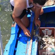 Pêcheries traditionnelles