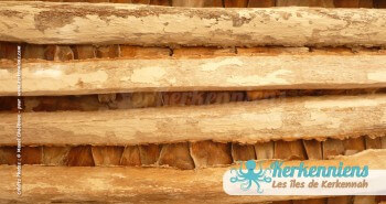 Plafonds sont faits de solives en stipe de palmier
