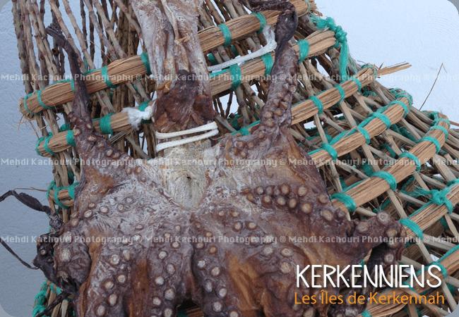 Poulpe sèché Karnit Kerkennah - kerkena