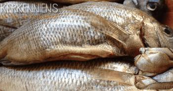 Ingrédients pour la Recette du poisson méchoui (Poisson au barbecue) à la Kerkennienne