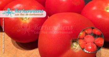 Recette de cuisine la sauce kerkénaise tomates fraiche kerkennaise