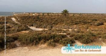 Fort Lahsar îles de Kerkennah Tunisie Borj Lahsar Kerkennah 17