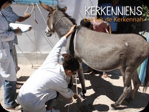 Sauvons les ânes des île de kerkennah - www.kerkenniens.com