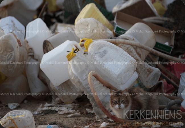 Tunisie: l'Archipel de Kerkennah submergée par les déchets - Kerkenniens - photo 1