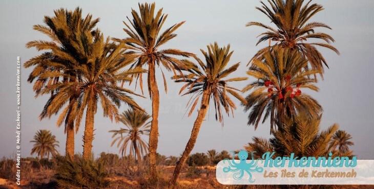 Vacances sur les îles Kerkennah en Tunisie